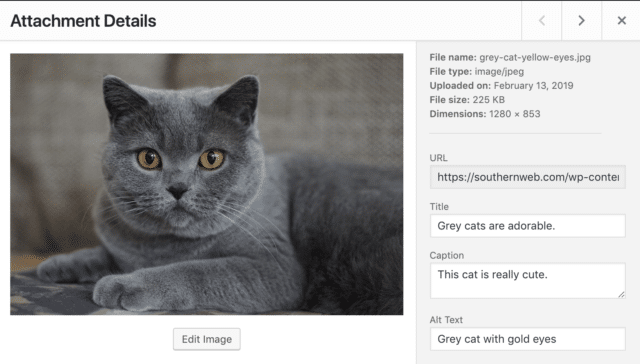 An example of how to input image tags into WordPress media library, using a photo of an adorable grey cat as the example image.
