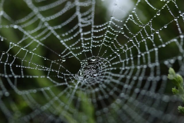 Photo of spider web to represent building links on the web for SEO